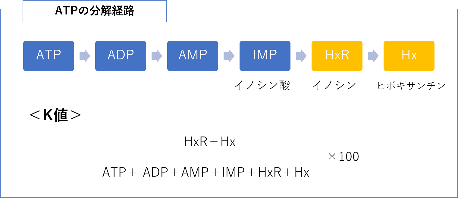 ATPの分解経路、K値